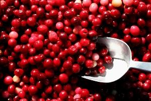 Houston OBGYN   Cranberries